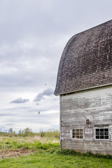 old barn with swallows