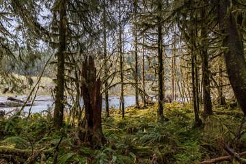 fern growing under trees in rain forest