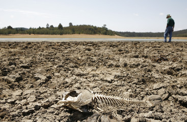 A skeleton of a fish is seen on the dry bed of Lake Penuelas on the outskirts of Valparaiso