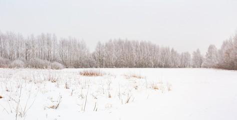 Winter foggy landscape in polish countryside