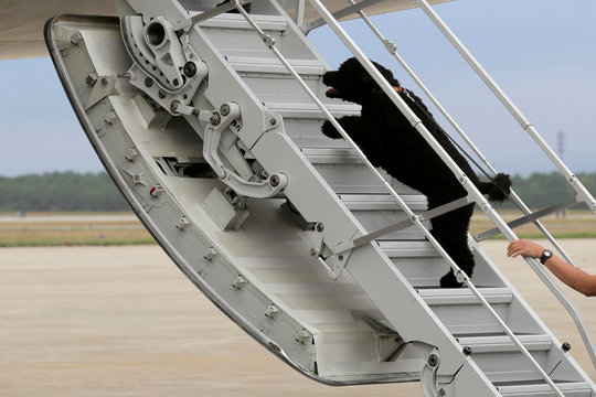 U.S. President Barack Obama's dog Sunny dashes aboard Air Force One at Cape Cod Coast Guard Air Station in Buzzards Bay, Massachusetts