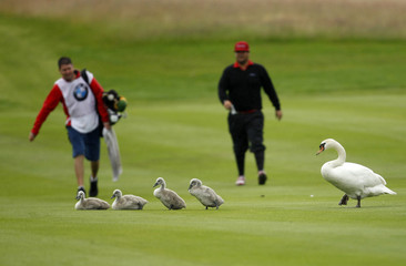 Sweden's Joel Sjoholm and his caddy gesture towards a family of swans during the final of the International Golf Open in Pulheim near Cologne