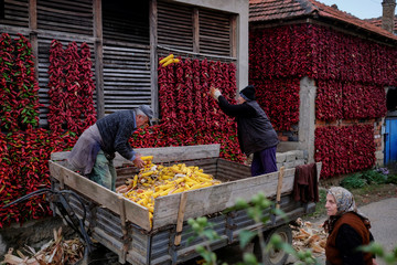 People work with corns as bunches of paprika hang on the walls of houses to dry in the village of Donja Lakosnica