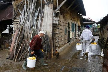 Men carry corn in a yard in Optasi-Magura, southern Romania