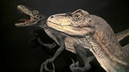 Dinosaur Exhibition at Sydney Museum