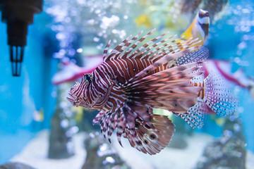 Marine fish and freshwater fish species in the Bueng Chawak Aquarium, Thailand.