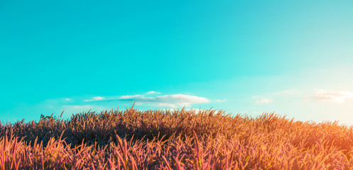 Grass field with sky