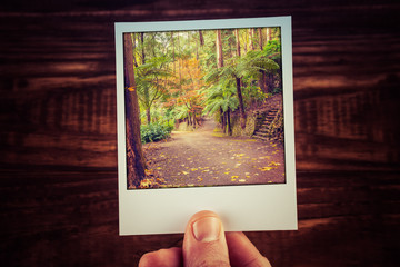 Hand holding polaroid photograph of autumn scene in Australian garden with copy space. Travel memories of good old times