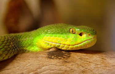 Snake Photos Royalty Free Images Graphics Vectors Videos