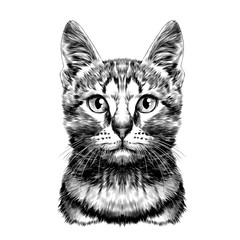 cat spotted striped head symmetrical sketch vector graphics black and white drawing