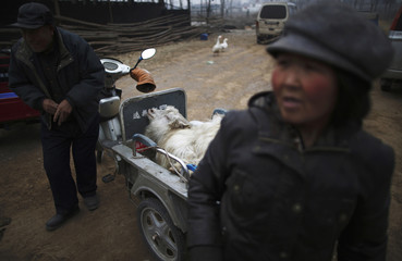 Farmers bring a goat to a slaughterhouse at Dashiwo village, on the outskirts of Beijing
