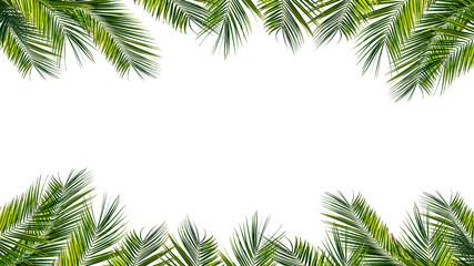 Photo sur Toile Palmier rahmen aus palmenblättern, palmwedeln auf weißem hintergrund