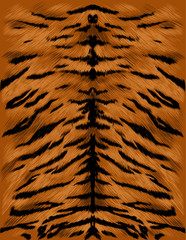 tiger fur texture sketch vector graphics color picture