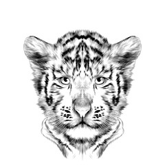 head cub the white tiger is symmetric, sketch vector graphics black and white drawing