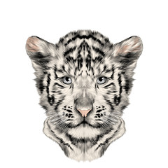 head cub the white tiger is symmetric, sketch vector graphics color picture
