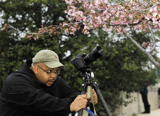 Photographer Jacques Gude lines up a cherry blossom branch in Washington