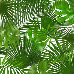 Green tropical leaves as background