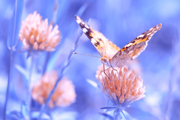Bright butterfly on a clover flower . Beautiful pics and artistic way. Selective focus