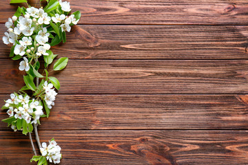 Tree branches with blooming flowers on wooden background