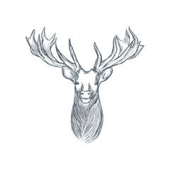Head of deer illustration sketch hand drawn vector