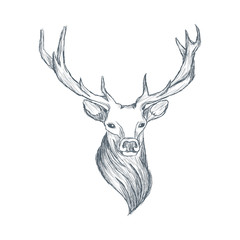 Head of deer illustration sketch hand drawn vector