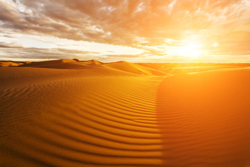 Poster de jardin Desert de sable Golden sands and dunes of the desert. Mongolia