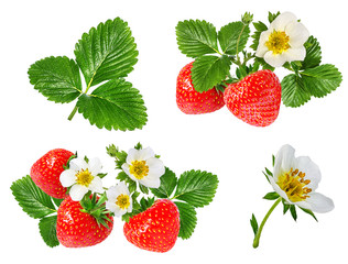 strawberry and strawberry flower isolated on white