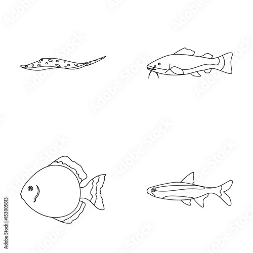 angelfish common barbus neon fish set collection icons in outline