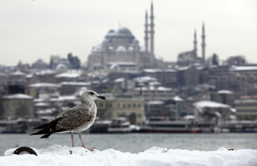 A seagull, with the Suleymaniye mosque in the background, stands in the snow by the Golden Horn in Istanbul