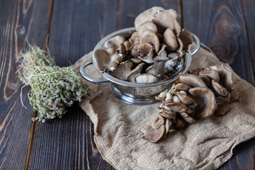 Oyster mushrooms on a neutral background