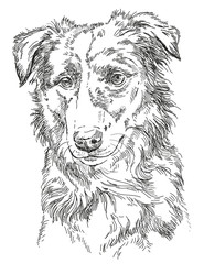Vector Border collie