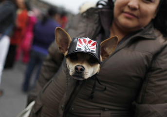 A woman carries her dog wearing a cap with the logo of former electricity company Luz y Fuerza del Centro during a protest march in Mexico City