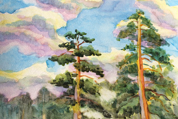 Watercolor painting of Pine trees and clouds sky