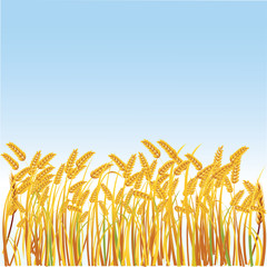 Illustration of a field with realistic spikes