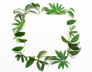 Frame of green leaves, plants on a white background