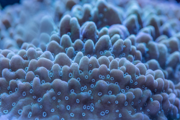 Macro shoot of coral montipora