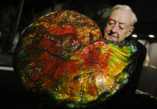 Employee David Thomas poses with a rare iridescent ammonite at Summers Place Auctions in Billingshurst, southern England