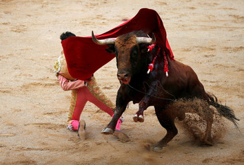 Spanish bullfighter Lopez Simon performs a pass to a bull on his knees during a bullfight at the San Fermin festival in Pamplona