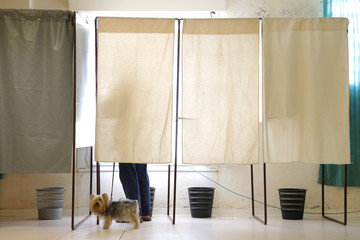 A dog stands in a voting booth with its owner as citizens take part in the run-off primary vote to select a Socialist Party candidate for the 2012 presidential elections, in Kourou