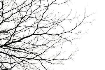 tree branch silhouette photography , white background Wall mural