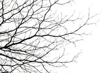 tree branch silhouette photography , white background Fotoväggar