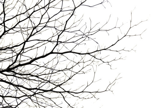 tree branch silhouette photography , white background