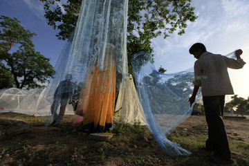 A man displays mosquito nets on a tree for sale along a roadside in Islamabad