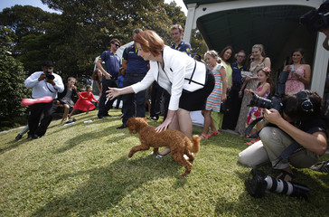 Australia's PM Gillard throws a toy for her dog at an afternoon tea for Australia's and Sri Lanka's test cricket teams in Sydney