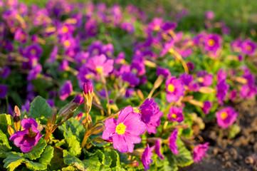 Spring flowers. Natural floral background.