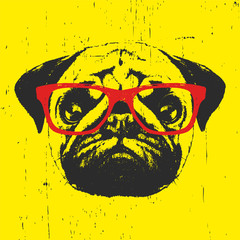 Portrait of Pug Dog with glasses. Hand drawn illustration. T-shirt design.Vector