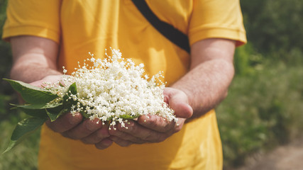 Man is standing outside holding a bunch of elder flowers in hands, close up