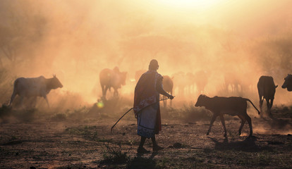 A Masai herder walks with grazing cattle during a celebration of an initiation ceremony in the remote village of Eremit, some 80 km (50 miles) southwest of Nairobi