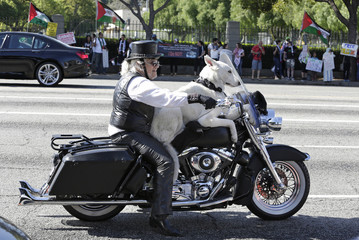Gerbracht rides his Harley Davidson motorcycle with his dog on Wilshire Boulevard in Los Angeles