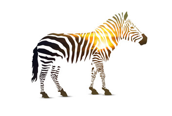 Zebra. Double exposure. Stripes with sunset landscape.